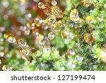 closeup moss | Shutterstock . vector #127199474