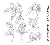 hand drawn sketch roses element ... | Shutterstock .eps vector #1272159673