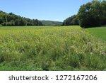 a sunflower field on the schw...   Shutterstock . vector #1272167206