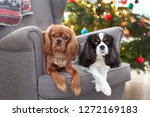 two cute dogs on the armchair... | Shutterstock . vector #1272169183