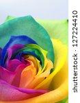 Macro Of Rainbow Rose Heart An...