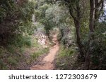 mountain path among forest...   Shutterstock . vector #1272303679
