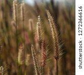 wild grass flowers closeup with ... | Shutterstock . vector #1272366616