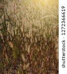 wild grass flowers closeup with ... | Shutterstock . vector #1272366619