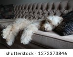 sleeping puppy on couch | Shutterstock . vector #1272373846