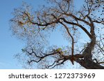 autumn tree branch shading with ... | Shutterstock . vector #1272373969