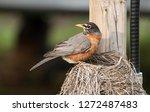 Closeup Of A Mother Bird...