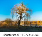 weeping willow on the bank of... | Shutterstock . vector #1272519853