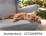 cute dog napping on the... | Shutterstock . vector #1272608956