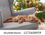 cute dog napping on the... | Shutterstock . vector #1272608959
