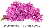 the large purple lilac branch... | Shutterstock . vector #1272663919