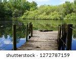 Sunbathing Alligator On Dock