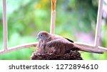 bird build their nest and hatch ... | Shutterstock . vector #1272894610