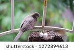 bird build their nest and hatch ... | Shutterstock . vector #1272894613