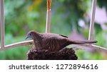 bird build their nest and hatch ... | Shutterstock . vector #1272894616