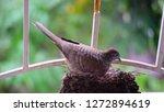 bird build their nest and hatch ... | Shutterstock . vector #1272894619