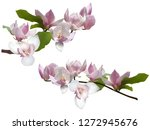 magnolia branches isolated... | Shutterstock .eps vector #1272945676