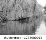 weeping willow on the banks of... | Shutterstock . vector #1273080016