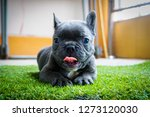 canine puppies are cute and... | Shutterstock . vector #1273120030