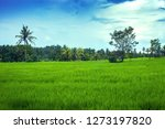 spring green rice fields by... | Shutterstock . vector #1273197820