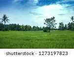spring green rice fields by... | Shutterstock . vector #1273197823