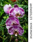 Purple Orchids Exotic Colorful Floral - Fine Art prints