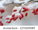 backgrounds and texture  red... | Shutterstock . vector #1273205089