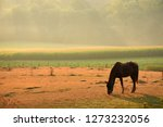 horse in field with mist in... | Shutterstock . vector #1273232056