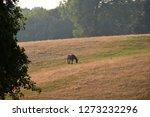 horse in green fields  | Shutterstock . vector #1273232296