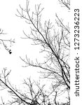 tree branches silhouette on... | Shutterstock . vector #1273236223