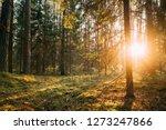 beautiful sunset sunrise sun...   Shutterstock . vector #1273247866