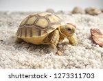 Cute Portrait Of Baby Tortoise...