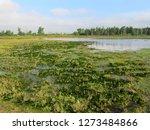 the  muggenwaart  in the... | Shutterstock . vector #1273484866
