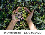Girl Hands With Olives  Picking ...