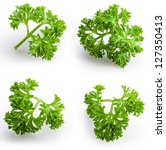 collection of parsley isolated... | Shutterstock . vector #127350413
