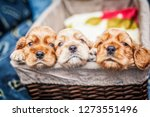 Stock photo small puppies cocker spaniel in the basket 1273551496