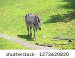 a zebra st the zoo   Shutterstock . vector #1273620820