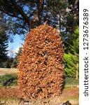 thabor park in rennes | Shutterstock . vector #1273676389