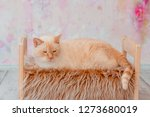Stock photo thai white with red marks cat with blue eyes lies on small wooden bed with faux fur blanket on 1273680019