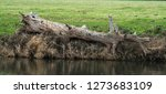 Big Tree Trunk Washed Up On A...