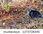 a norwegian forest cat in... | Shutterstock . vector #1273728340