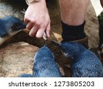 Small photo of Purposeful Plucky Little Penguins Anticipating a Tasty Fish From a Keepers Hand.