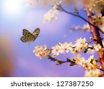 apple tree flowers in spring... | Shutterstock . vector #127387250
