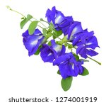 pea flower isolated on white... | Shutterstock . vector #1274001919