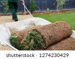 gardener laying rolled turf | Shutterstock . vector #1274230429