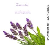 fresh  leaves and flowers of...   Shutterstock . vector #127428038