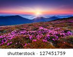 Magic Pink Rhododendron Flowers ...