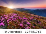 magic pink rhododendron flowers ... | Shutterstock . vector #127451768