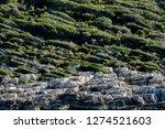 walking lycian way adventure.... | Shutterstock . vector #1274521603