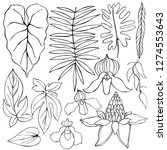 hand drawn tropical plants....   Shutterstock .eps vector #1274553643